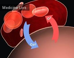 Гематология: Газы крови: перенос углекислоты