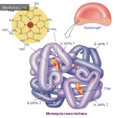 Гематология: Гемоглобин и Оксигемоглобин