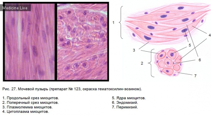 Медицинские книги: Атлас цитологии и общей гистолгии КрасГМУ