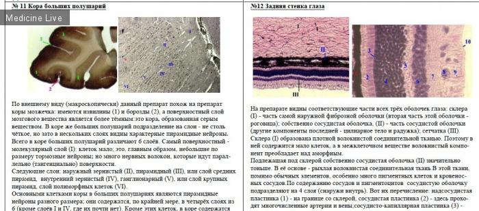 Гистология, эмбриология, цитология: Препараты и билеты к экзамену по гистологии