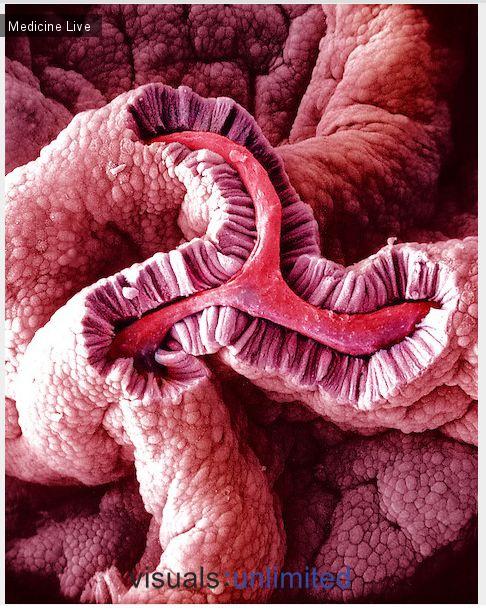Красивые фотографии: Цилиндрический эпителий желчного пузыря