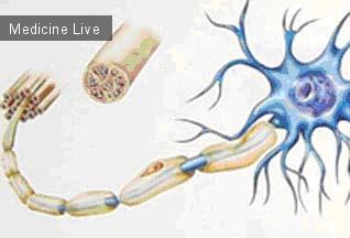 Физиология: Нормальная физиология-Лекция 3- Свойства нервов