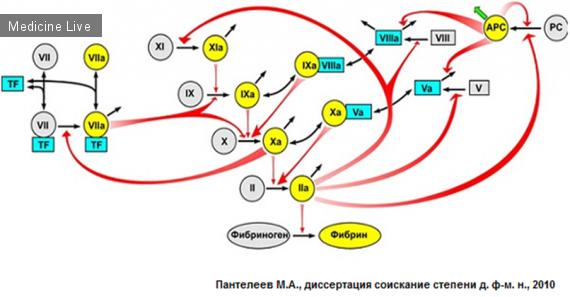 компоненты гемостаза