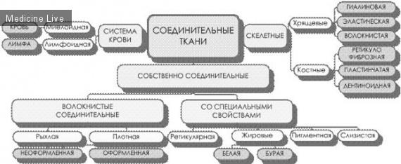 ч6 - соединительная ткань