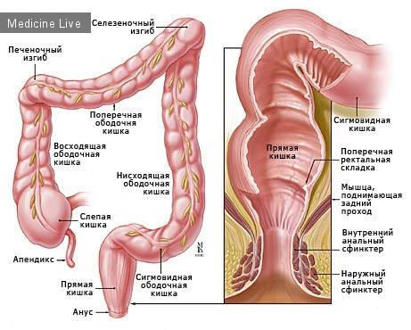 Хирургия - лекция 5 - Заболевания кишечника
